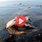 Чудо рыба, приколы на рыбалке